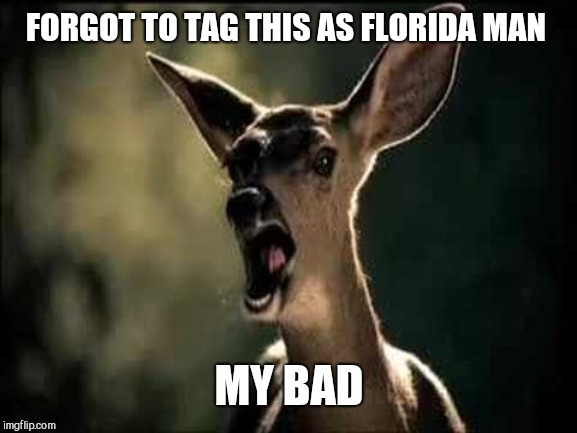 Deer Scream | FORGOT TO TAG THIS AS FLORIDA MAN MY BAD | image tagged in deer scream | made w/ Imgflip meme maker