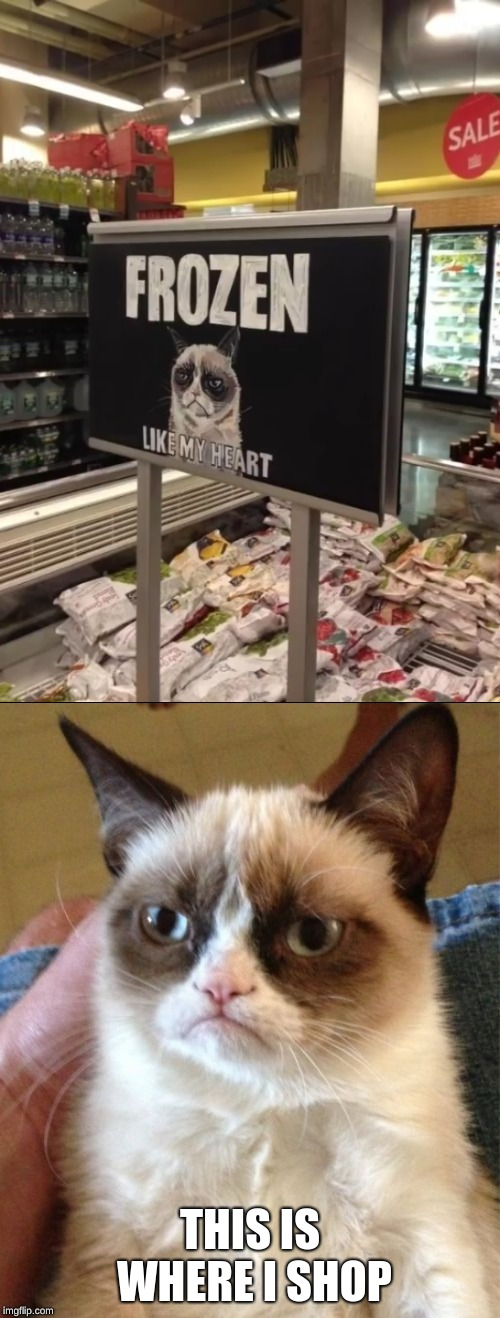 Found This Image and Couldn't Resist! | THIS IS WHERE I SHOP | image tagged in memes,grumpy cat,funny,frozen,shopping | made w/ Imgflip meme maker