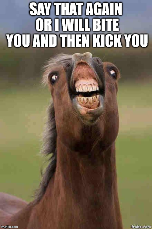 horse face | SAY THAT AGAIN OR I WILL BITE YOU AND THEN KICK YOU | image tagged in horse face | made w/ Imgflip meme maker