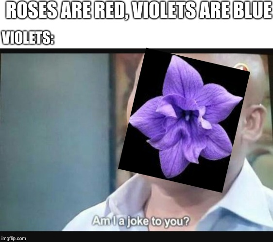 Am I a joke to you? | ROSES ARE RED, VIOLETS ARE BLUE VIOLETS: | image tagged in am i a joke to you | made w/ Imgflip meme maker