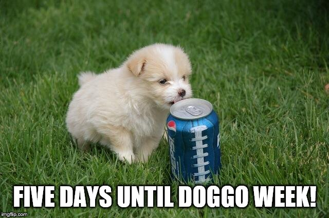 Five days until doggo week! | FIVE DAYS UNTIL DOGGO WEEK! | image tagged in doggos,doggo week,pupper,meme,puppy,cute puppies | made w/ Imgflip meme maker