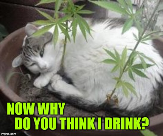 NOW WHY DO YOU THINK I DRINK? | made w/ Imgflip meme maker