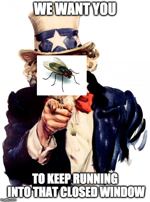 Uncle Fly | WE WANT YOU TO KEEP RUNNING INTO THAT CLOSED WINDOW | image tagged in memes,uncle sam | made w/ Imgflip meme maker