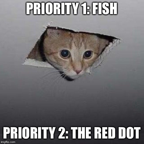 Got your priorities straight | PRIORITY 1: FISH PRIORITY 2: THE RED DOT | image tagged in memes,ceiling cat,cats,funny | made w/ Imgflip meme maker