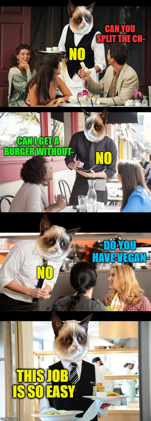 Why do humans think this job is stressful? | CAN YOU SPLIT THE CH- THIS JOB IS SO EASY NO CAN I GET A BURGER WITHOUT- NO DO YOU HAVE VEGAN- NO | image tagged in memes,grumpy cat,waiter,no special orders,funny | made w/ Imgflip meme maker