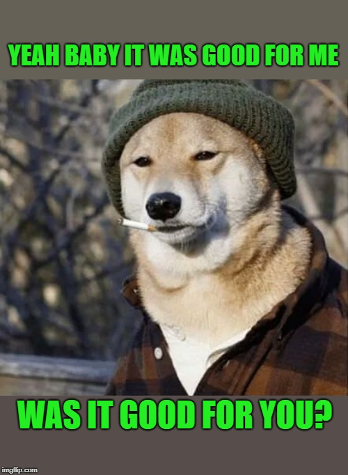 afterglow | YEAH BABY IT WAS GOOD FOR ME WAS IT GOOD FOR YOU? | image tagged in dog,cigarette | made w/ Imgflip meme maker