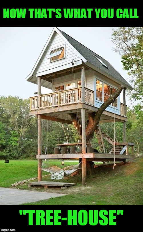 "Treehouse  | NOW THAT'S WHAT YOU CALL ""TREE-HOUSE"" 