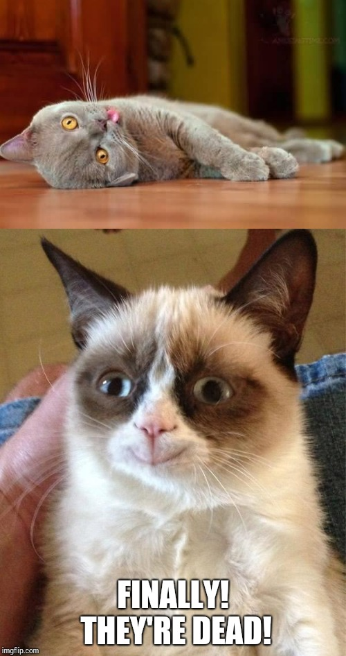 My reaction if one my rivals died by falling down the stairs. | FINALLY! THEY'RE DEAD! | image tagged in memes,grumpy cat happy,dead cat,finally,high school,rivalry | made w/ Imgflip meme maker