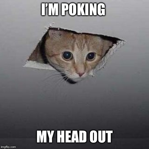 Ceiling Cat Meme | I'M POKING MY HEAD OUT | image tagged in memes,ceiling cat | made w/ Imgflip meme maker