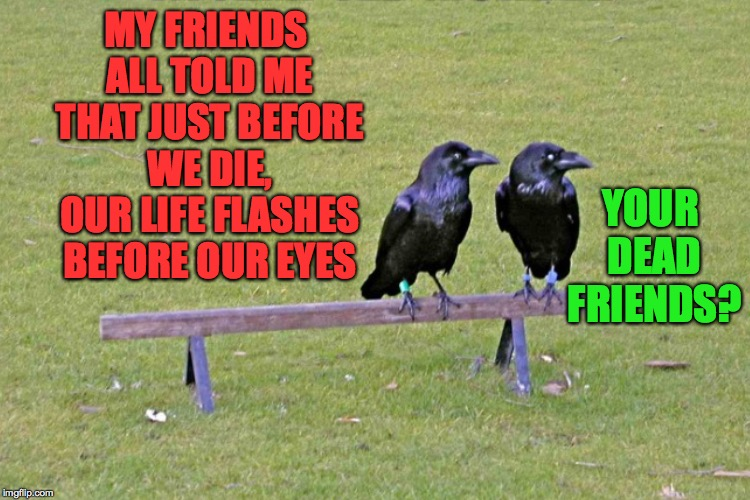 Like how else would they know? | MY FRIENDS ALL TOLD ME THAT JUST BEFORE WE DIE, OUR LIFE FLASHES BEFORE OUR EYES YOUR DEAD FRIENDS? | image tagged in memes,heckle and jeckle | made w/ Imgflip meme maker