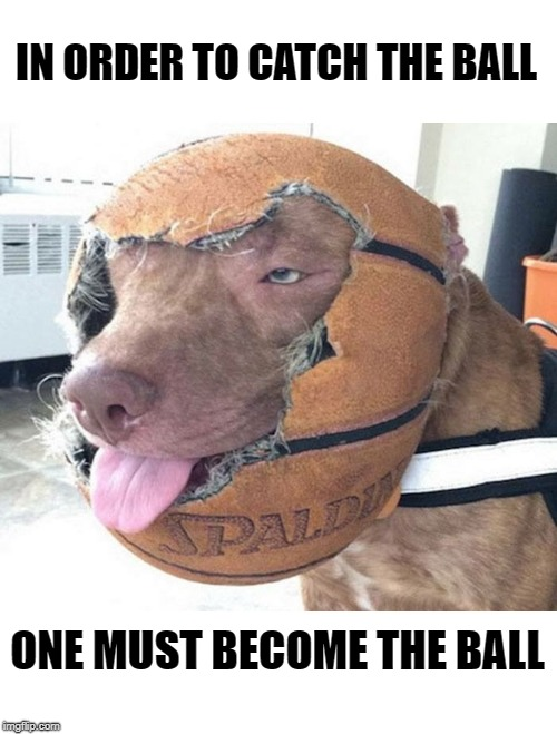 ok i caught the ball! | IN ORDER TO CATCH THE BALL ONE MUST BECOME THE BALL | image tagged in dog,ball,silly,upvote | made w/ Imgflip meme maker