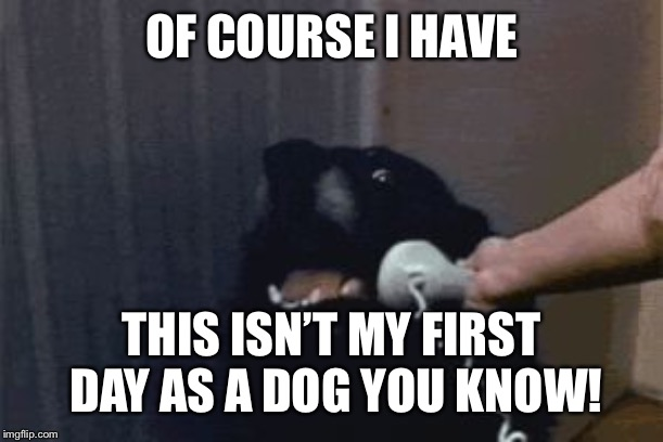 Dog Phone | OF COURSE I HAVE THIS ISN'T MY FIRST DAY AS A DOG YOU KNOW! | image tagged in dog phone | made w/ Imgflip meme maker