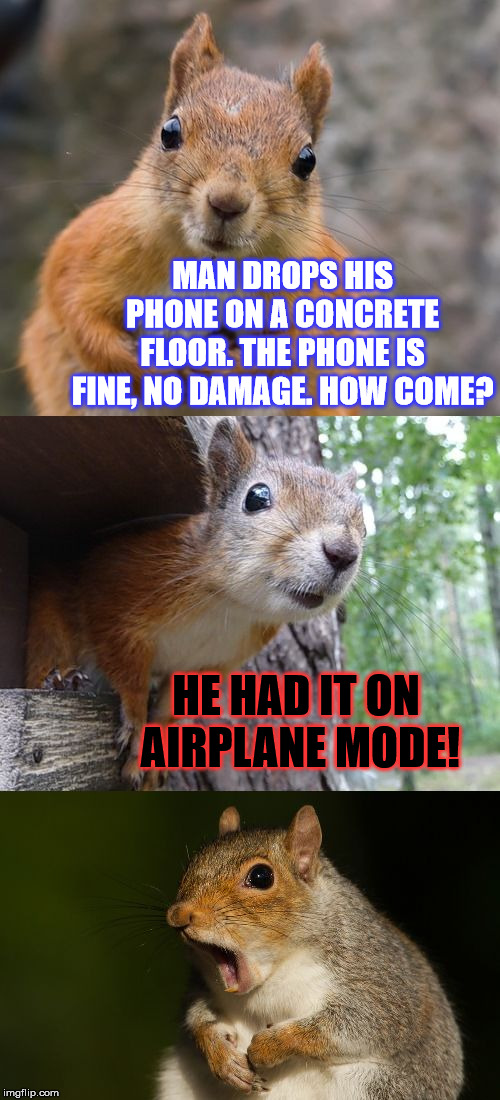 I need to try this with mine... | MAN DROPS HIS PHONE ON A CONCRETE FLOOR. THE PHONE IS FINE, NO DAMAGE. HOW COME? HE HAD IT ON AIRPLANE MODE! | image tagged in bad pun squirrel,funny,jokes,phone,memes,squirrel | made w/ Imgflip meme maker