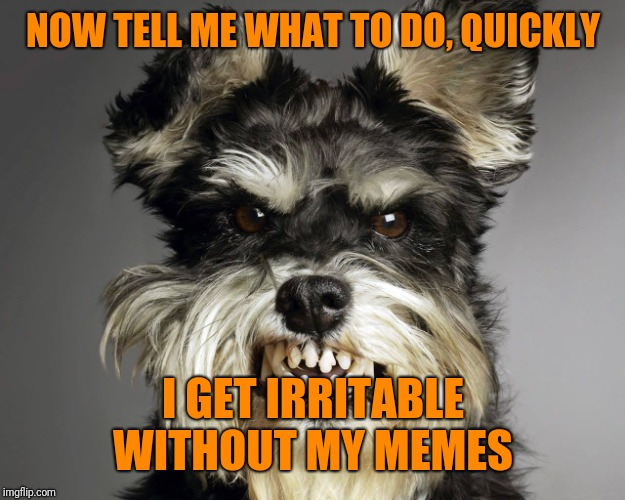 Angry Dog | NOW TELL ME WHAT TO DO, QUICKLY I GET IRRITABLE WITHOUT MY MEMES | image tagged in angry dog | made w/ Imgflip meme maker