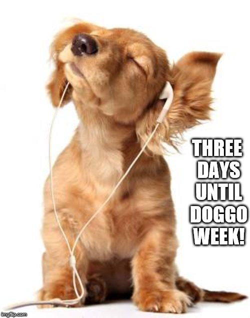 Three days until doggo week! | THREE DAYS UNTIL DOGGO WEEK! | image tagged in puppy,cute,doggo,doggo week,dachshund,pupper | made w/ Imgflip meme maker