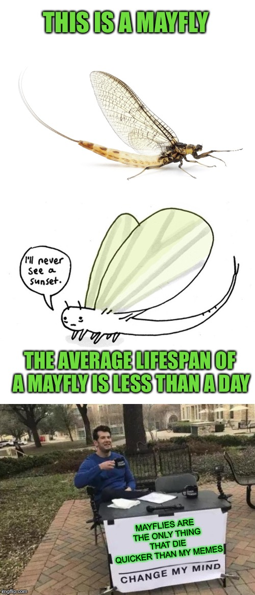 Help this little guy, have a longer and more prosperous life than usual.  | THIS IS A MAYFLY MAYFLIES ARE THE ONLY THING THAT DIE QUICKER THAN MY MEMES THE AVERAGE LIFESPAN OF A MAYFLY IS LESS THAN A DAY | image tagged in memes,drop,like,flies | made w/ Imgflip meme maker