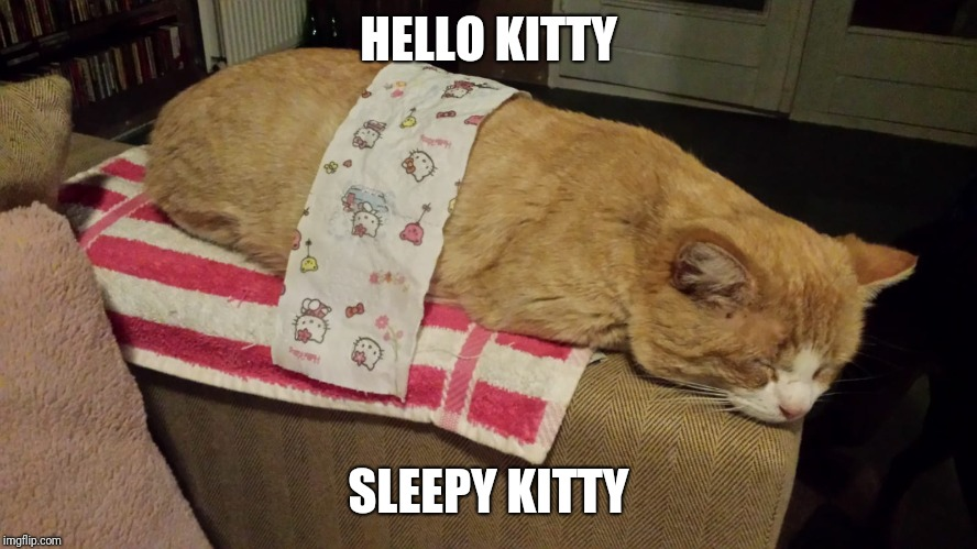 HELLO KITTY SLEEPY KITTY | image tagged in kitty,meme | made w/ Imgflip meme maker