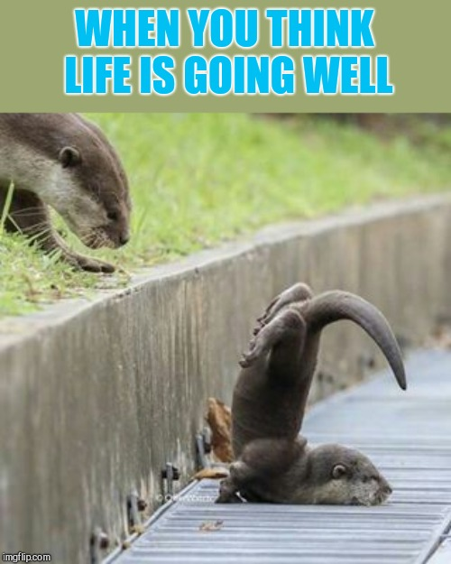 WHEN YOU THINK LIFE IS GOING WELL | image tagged in otter | made w/ Imgflip meme maker