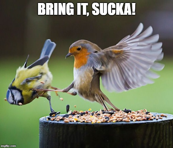 Bird kicking bird | BRING IT, SUCKA! | image tagged in bird kicking bird | made w/ Imgflip meme maker