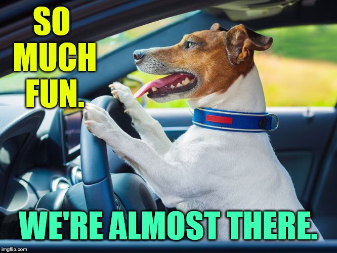 It's Getting Close...Doggo Week March 10-16 a Blaze_the_Blaziken and 1forpeace Event | SO MUCH FUN. WE'RE ALMOST THERE. | image tagged in memes,doggo week,dog driving,to,have fun,almost there | made w/ Imgflip meme maker