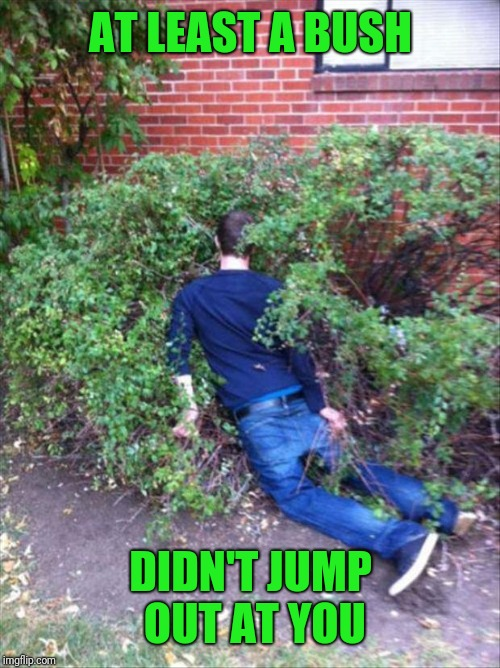 Drunk and passed out | AT LEAST A BUSH DIDN'T JUMP OUT AT YOU | image tagged in drunk and passed out | made w/ Imgflip meme maker