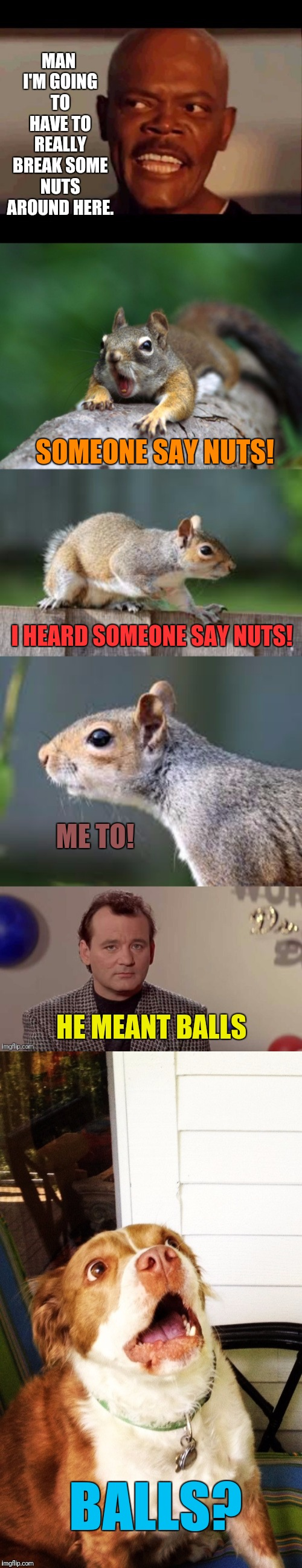 Misunderstandings Abound | MAN I'M GOING TO HAVE TO REALLY BREAK SOME NUTS AROUND HERE. I HEARD SOMEONE SAY NUTS! SOMEONE SAY NUTS! ME TO! HE MEANT BALLS BALLS? | image tagged in bill murray,samuel l jackson,squirrels,what do we want,nuts | made w/ Imgflip meme maker