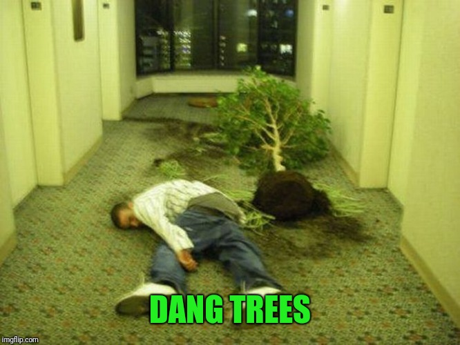 DANG TREES | made w/ Imgflip meme maker