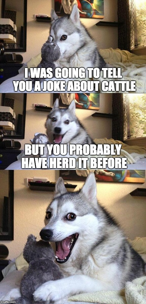 Bad Pun Dog Meme | I WAS GOING TO TELL YOU A JOKE ABOUT CATTLE BUT YOU PROBABLY HAVE HERD IT BEFORE | image tagged in memes,bad pun dog | made w/ Imgflip meme maker