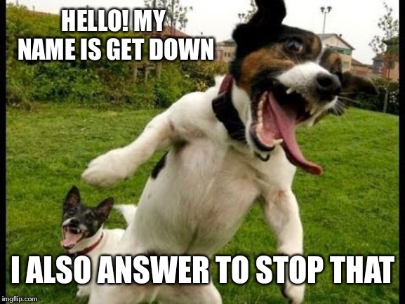 Happy doggo | HELLO! MY NAME IS GET DOWN I ALSO ANSWER TO STOP THAT | image tagged in happy dog | made w/ Imgflip meme maker