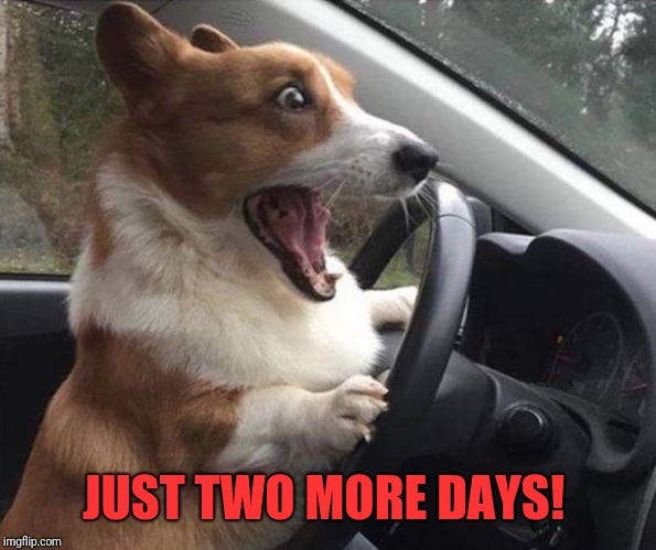 dog driving | JUST TWO MORE DAYS! | image tagged in dog driving | made w/ Imgflip meme maker