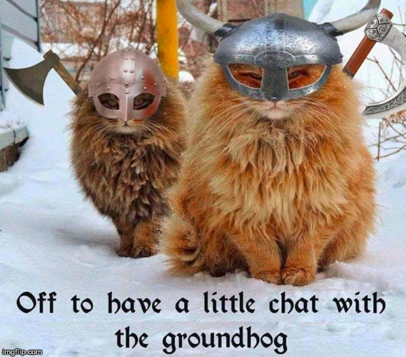 Sending the cats to get that lying groundhog - Imgflip
