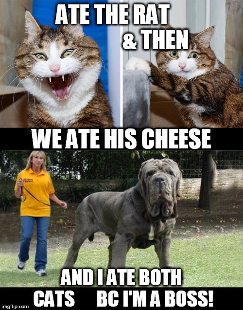 ATE THE RAT                    & THEN WE ATE HIS CHEESE AND I ATE BOTH CATS      BC I'M A BOSS! | made w/ Imgflip meme maker