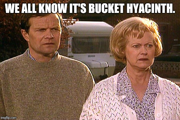 WE ALL KNOW IT'S BUCKET HYACINTH. | made w/ Imgflip meme maker