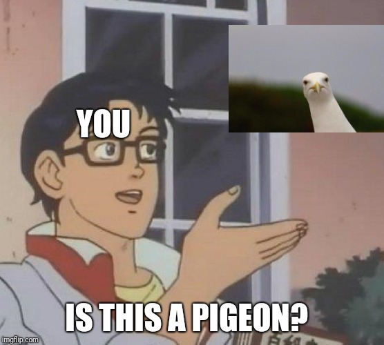 Is This A Pigeon Meme | YOU IS THIS A PIGEON? | image tagged in memes,is this a pigeon | made w/ Imgflip meme maker