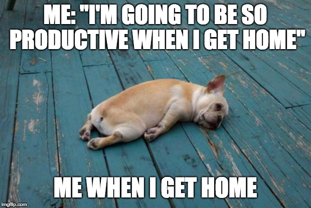 "Sleepy dog | ME: ""I'M GOING TO BE SO PRODUCTIVE WHEN I GET HOME"" ME WHEN I GET HOME 