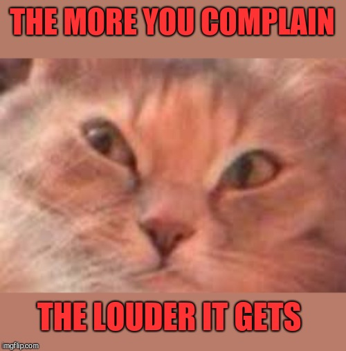 Triggered Cat | THE MORE YOU COMPLAIN THE LOUDER IT GETS | image tagged in triggered cat | made w/ Imgflip meme maker