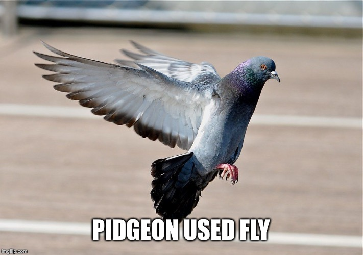 PIDGEON USED FLY | made w/ Imgflip meme maker