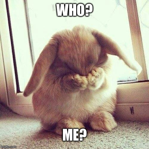 Shy rabbit | WHO? ME? | image tagged in shy rabbit | made w/ Imgflip meme maker