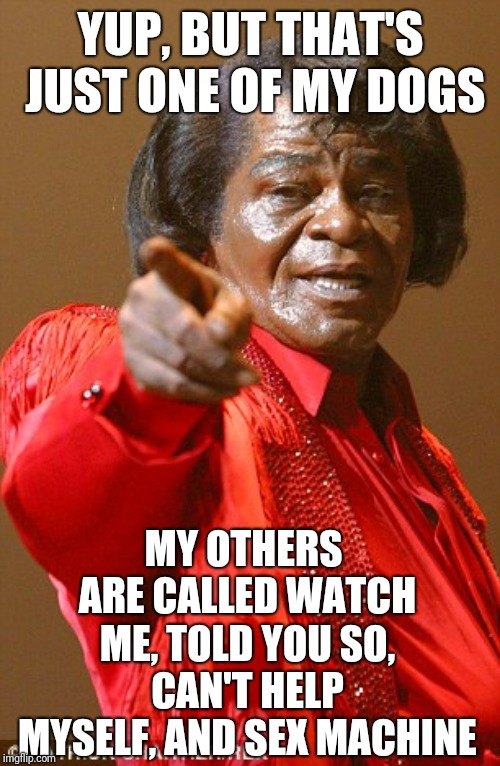 James Brown | YUP, BUT THAT'S JUST ONE OF MY DOGS MY OTHERS ARE CALLED WATCH ME, TOLD YOU SO, CAN'T HELP MYSELF, AND SEX MACHINE | image tagged in james brown | made w/ Imgflip meme maker