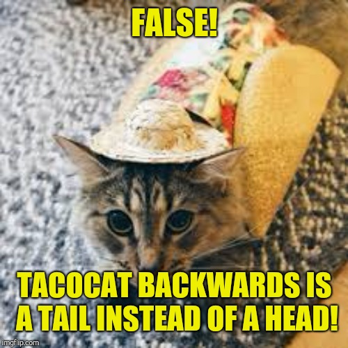 tacocat | FALSE! TACOCAT BACKWARDS IS A TAIL INSTEAD OF A HEAD! | image tagged in tacocat | made w/ Imgflip meme maker