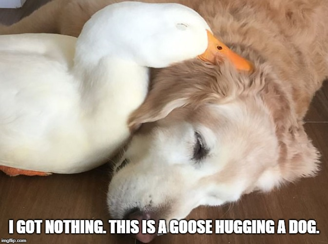 Got nothin | I GOT NOTHING. THIS IS A GOOSE HUGGING A DOG. | image tagged in cute animals,funny memes | made w/ Imgflip meme maker