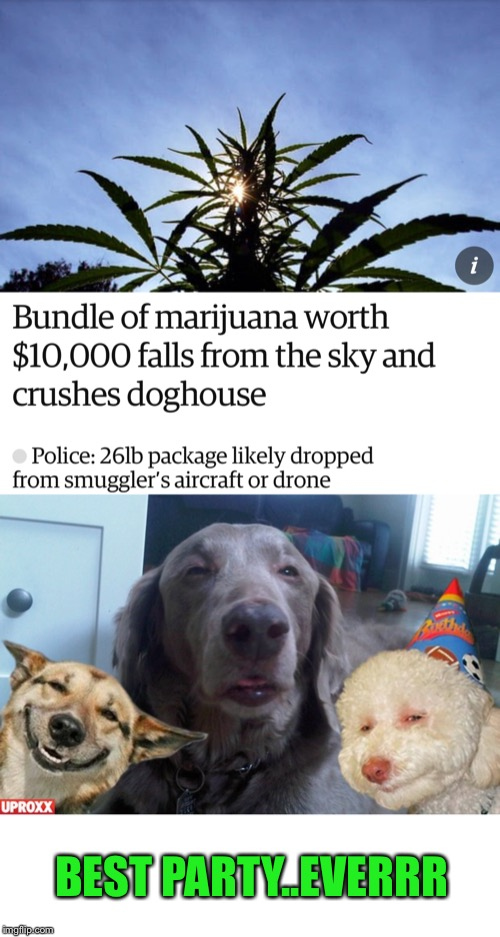 Maybe Snoop Dogg was just helping out his fellow doggo's? - Doggo Week March 10-16 a Blaze_the_Blaziken and 1forpeace Event | BEST PARTY..EVERRR | image tagged in doggo week,stoner dog,party,snoop dogg approves,1forpeace,blaze the blaziken | made w/ Imgflip meme maker