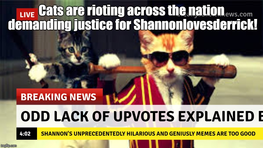 I totally felt like my memes should have had more upvotes. This thing has GOVERNMENT CONSPIRACY written all over it. | Cats are rioting across the nation demanding justice for Shannonlovesderrick! | image tagged in upvotes,cats,cat | made w/ Imgflip meme maker