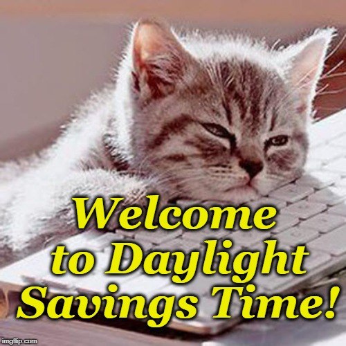 Welcome to Daylight Savings Time! | image tagged in sleepy cat | made w/ Imgflip meme maker