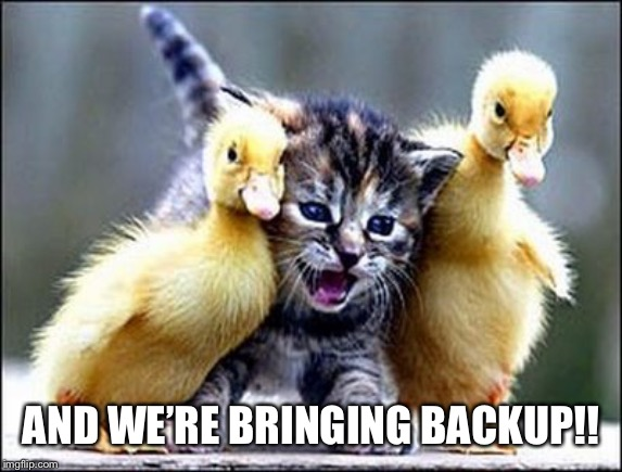 Kitten with ducklings | AND WE'RE BRINGING BACKUP!! | image tagged in kitten with ducklings | made w/ Imgflip meme maker
