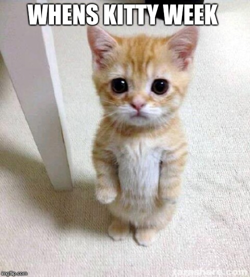 Cute Cat Meme | WHENS KITTY WEEK | image tagged in memes,cute cat | made w/ Imgflip meme maker