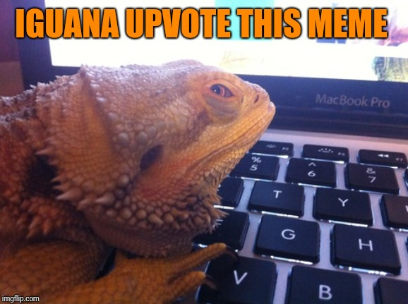 iguana coder | IGUANA UPVOTE THIS MEME | image tagged in iguana coder | made w/ Imgflip meme maker