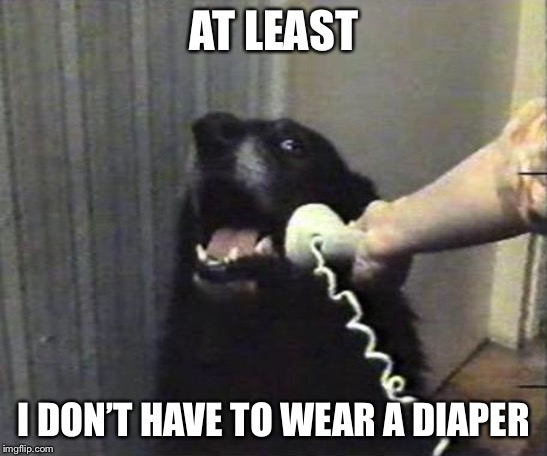 Yes this is dog | AT LEAST I DON'T HAVE TO WEAR A DIAPER | image tagged in yes this is dog | made w/ Imgflip meme maker