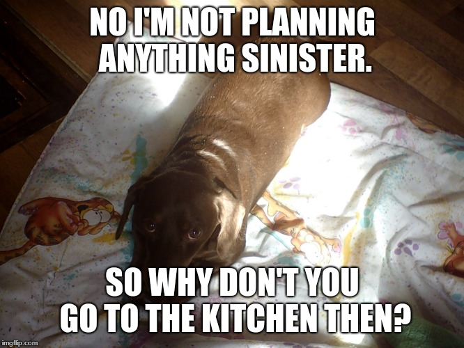 I am not going into the kitchen | NO I'M NOT PLANNING ANYTHING SINISTER. SO WHY DON'T YOU GO TO THE KITCHEN THEN? | image tagged in dachshund on blanket | made w/ Imgflip meme maker