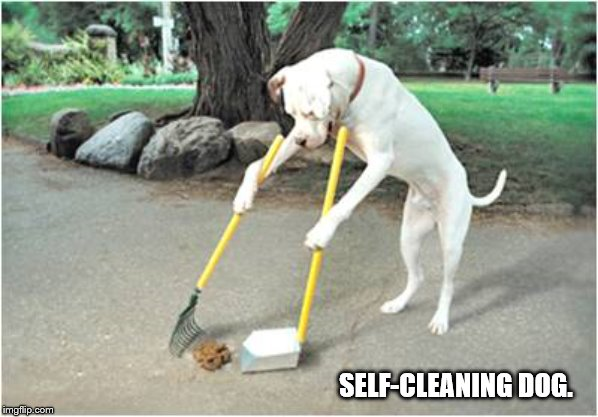 Self-cleaning dog. |  SELF-CLEANING DOG. | image tagged in doggo,doggo week,funny,meme,dog,pupper | made w/ Imgflip meme maker